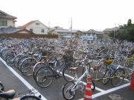 So many bikes it looks like they grow them!