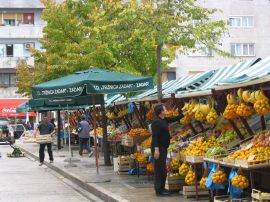 Bountiful citrus in Zadar, Croatia