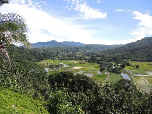 The Hanalei Valley on Kauai's North Shore.