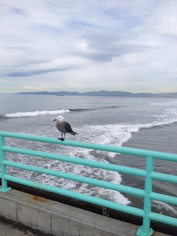 Resting on the Manhattan Beach Pier, January 2015.