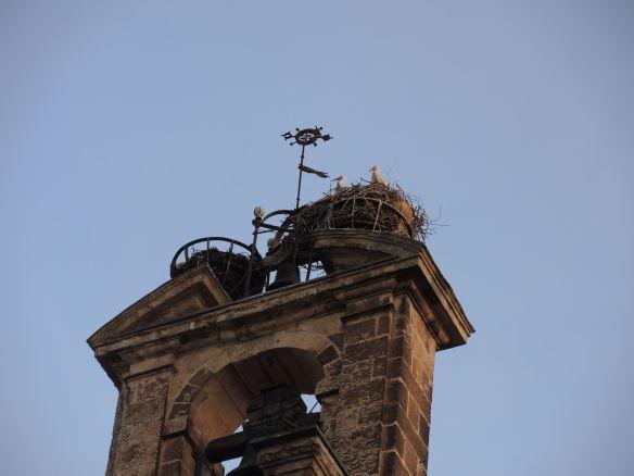 Salamanca storks close up