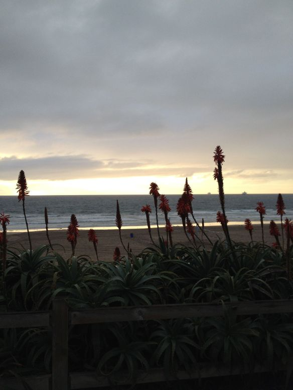 Manhattan Beach strand and flowers on New Year's Eve