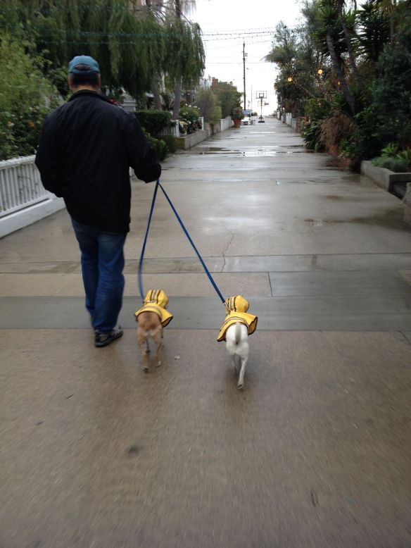 Koa and Lau Lau dogs wearing raincoats in Manhattan Beach on New Year's Eve